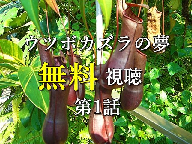 ウツボカズラの夢_第1話無料視聴